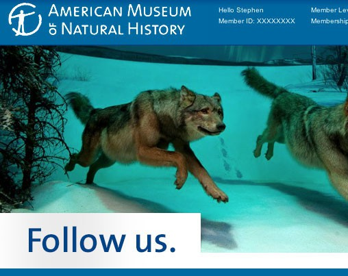 amnh feature image